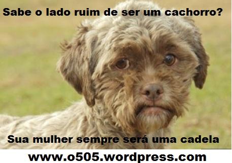 cachorro rosto humano